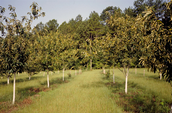 Sweet-chestnut-farm