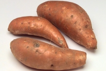Sweet-potato-rhizomes