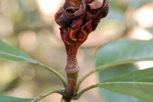 Dried-berry-cluster