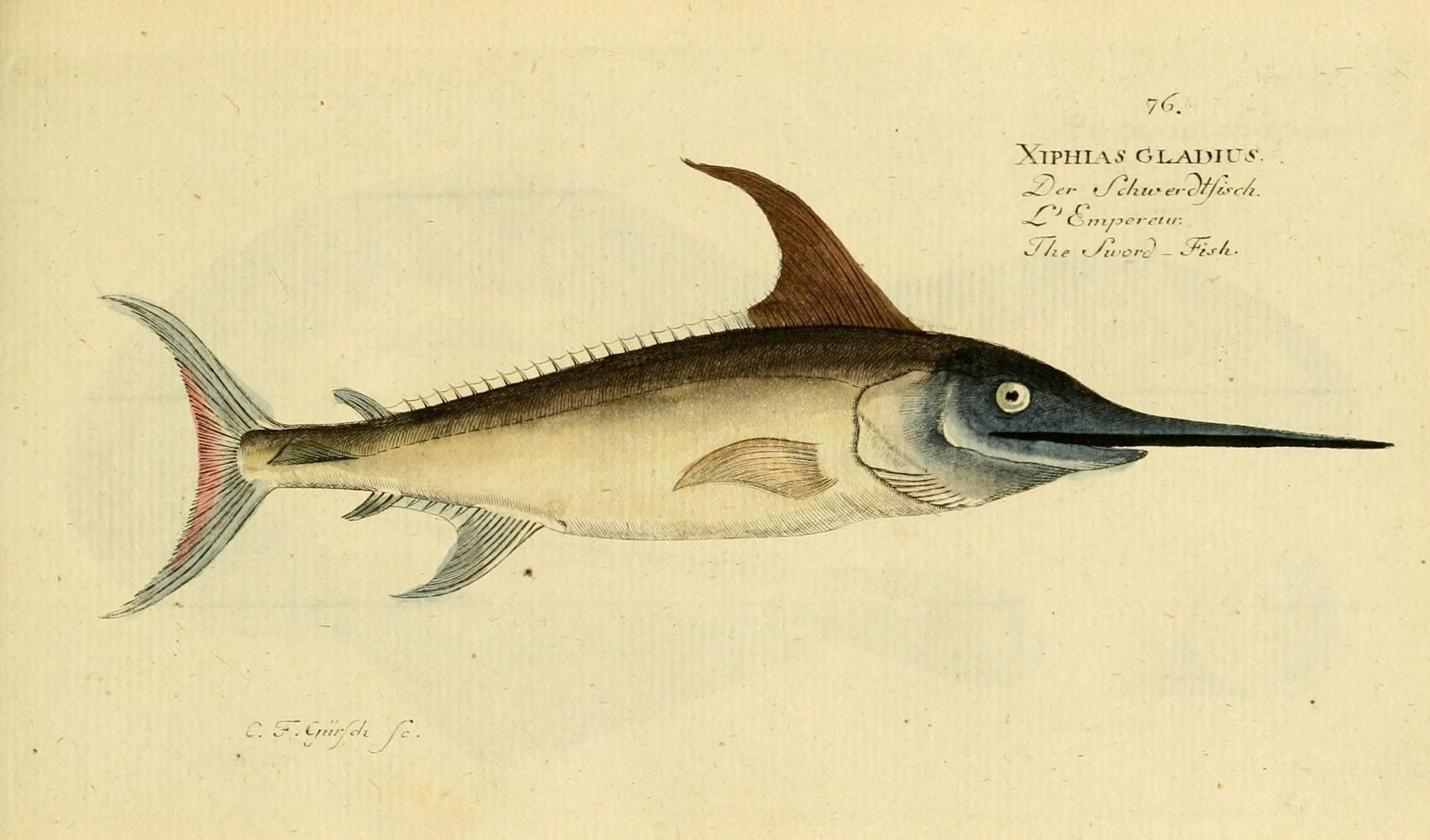 Illustration-of-Swordfish