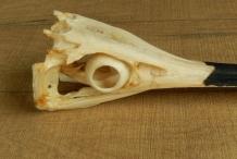 Swordfish-skull