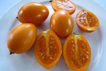 Orange-Tamarillo