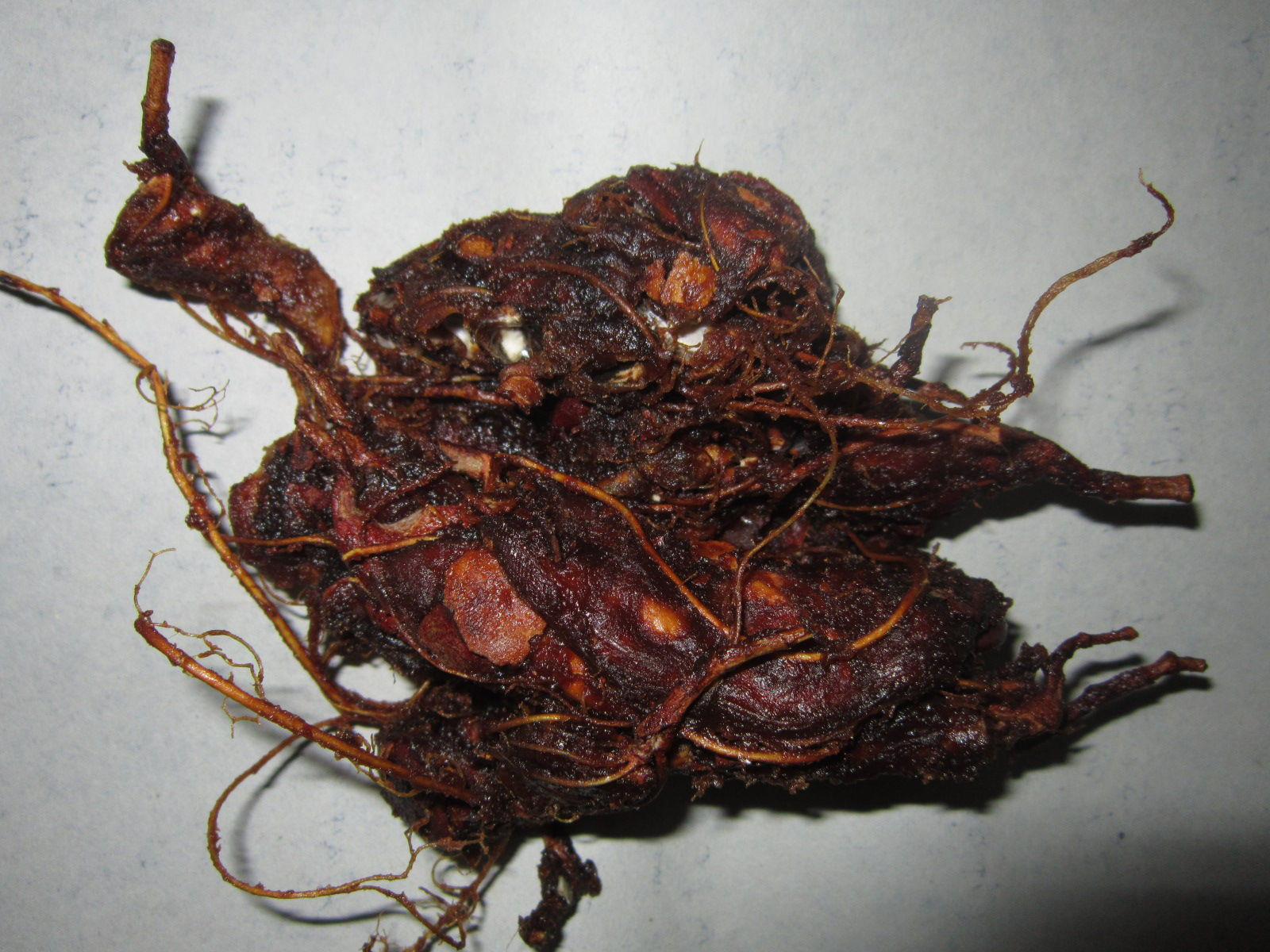 Pulp-of-Tamarind