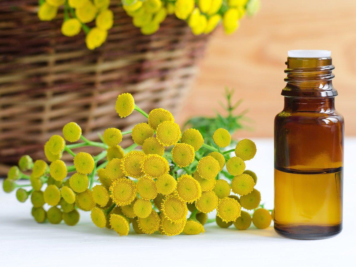 Tansy-essential-oil