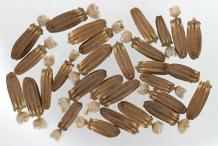 Seeds-of-Teasel-plant