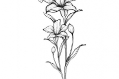 Sketch-of-Tiger-Lily