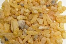 Tragacanth- Gum tragacanth milkvetch