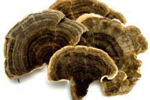 Dried--Turkey-Tail mushroom