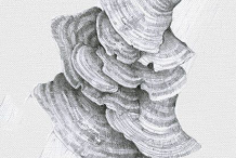 Sketch-of-Turkey-Tail-Mushroom