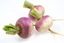 Turnip-bulbs