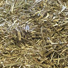 Dried-Vervain-plant