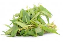 Bunch-of-Vietnamese-coriander