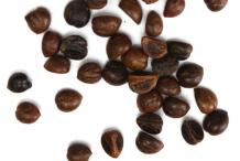 Seeds-of-Virginia-creeper-plant
