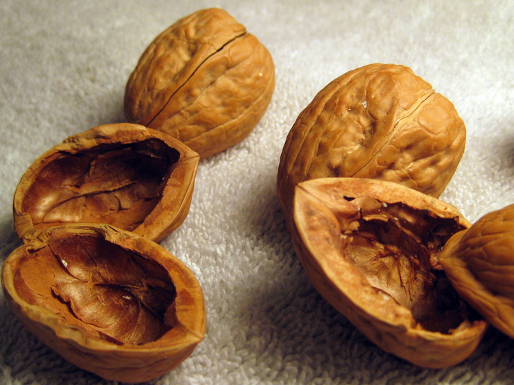 Walnut-shell