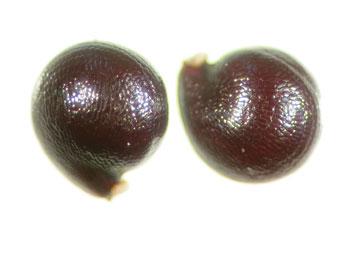 Seeds-of-Water-blinks