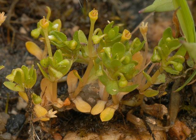 Water-blinks-Plant