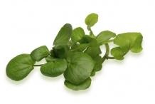 Leaves-of-Watercress