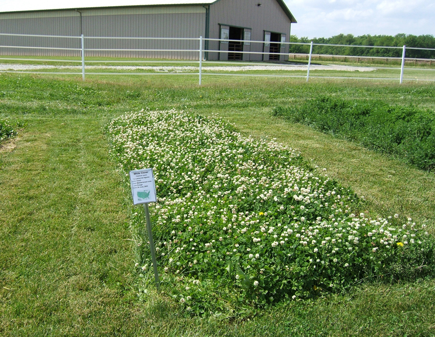 White-clover-farm