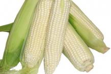White-maize