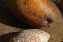 Mango-seeds