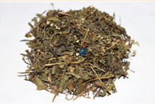 Dried-Whiteweed-plant