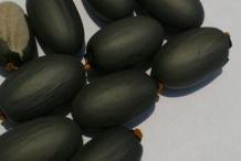 Seeds-of-Wild-Almond