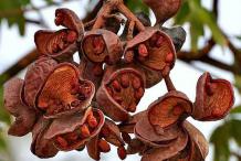 Dried-Wild-Almond-Fruit