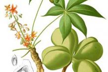 Plant-illustration-of-Wild-Almond