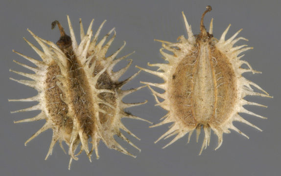 Dried-individual-fruit