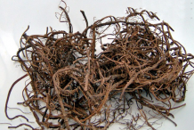Dried-roots-of-Wild-Ginger
