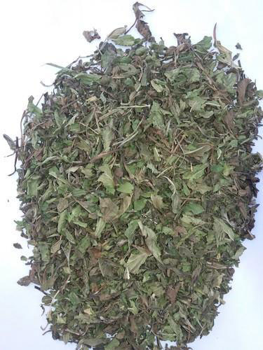 Dried-leaves-of-Wild-mint
