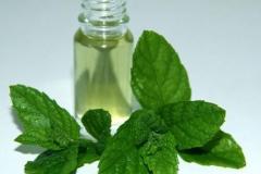 Wild-mint-oil