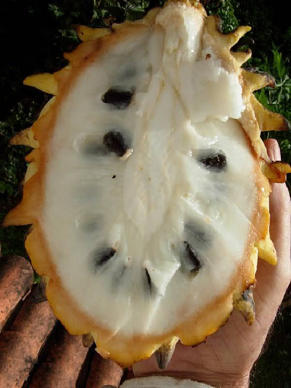 Half-cut-Wild-Sugar-apple