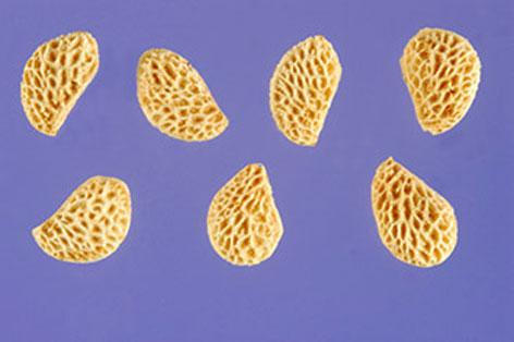 Seeds-of-Wineberry