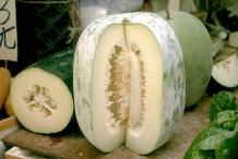 Half-cut-Winter-melon