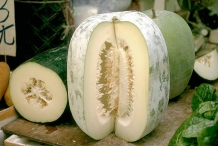 Half-cut-Winter-melon