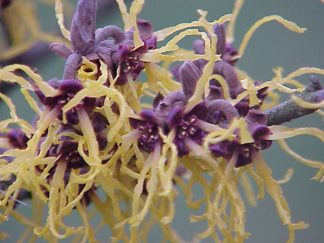 Closer-view-of-Flowers