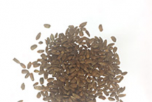 Seeds-of-Wood-betony