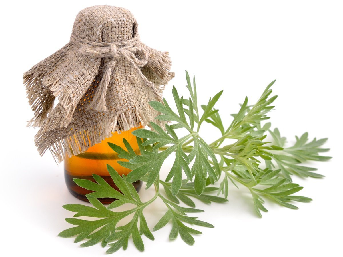 Wormwood-essential-oil