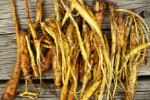 Yellow-dock-root