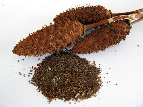 Dried-fruits-and-seeds-of-Yerba-Mansa