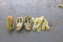 Half-cut-Yucca-fruit