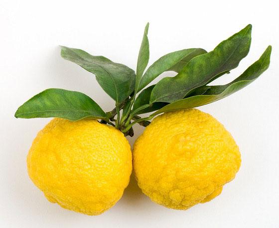 Yuzu-Fruit