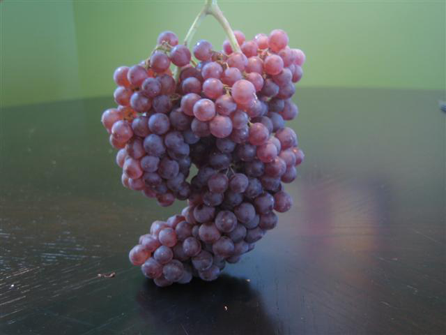 Bunch-of-Zante-Currant
