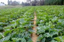 Zucchini-farm
