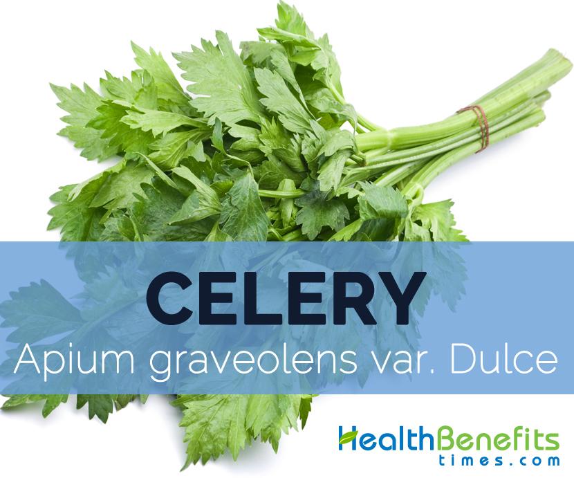 Celery---Apium-graveolens-var.-Dulce