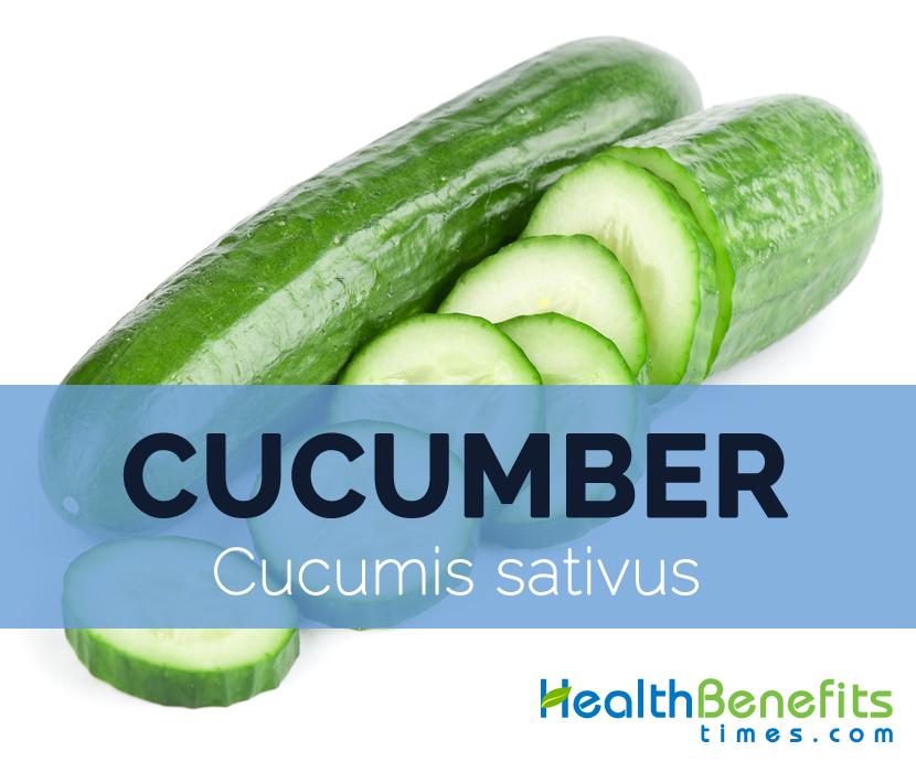 Cucumber---Cucumis-sativus