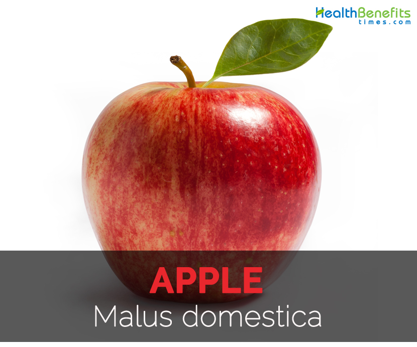 Apple Facts Health Benefits And Nutritional Value
