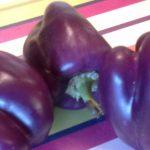 Purple-Bell-pepper