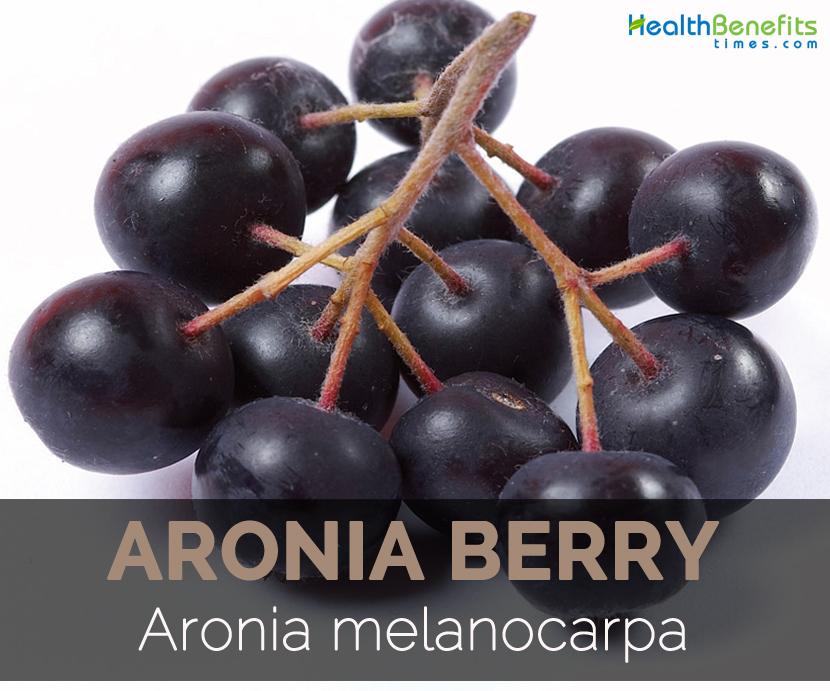 aronia-berry-aronia-melanocarpa